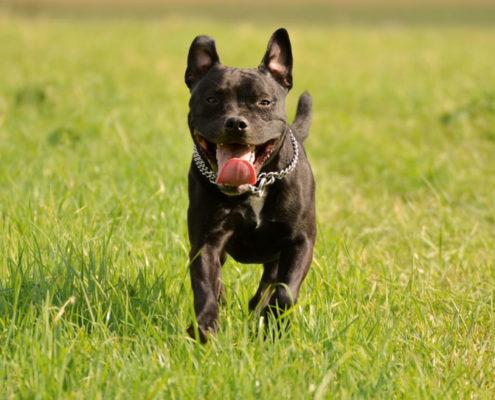Hund rennt der tut nix