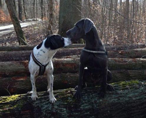 Hunde Sozialkontakt